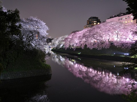 Yozakura - cherry blossoms at night images