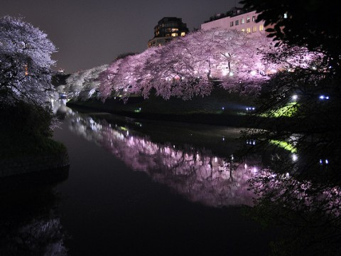 Spring in Japan is cherry blossom season images