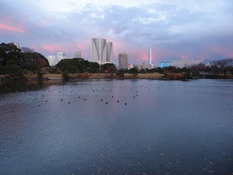 Beautiful Japanese Garden, Hama Rikyu Gardens In Japan images
