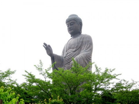 Tallest Budha in Japan, horses, beer and more images