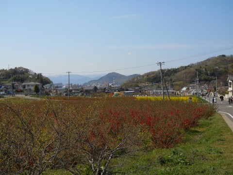 Mt. Hanamiyama - Hanamiyama Park - Fukushima City images