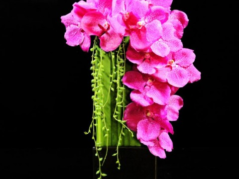 Japanese Perfection in Flower Gift Design images