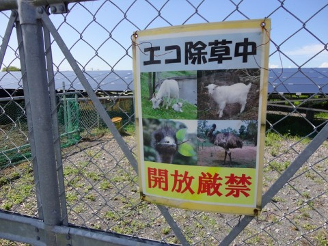 What emus have to do with Japanese Technology images