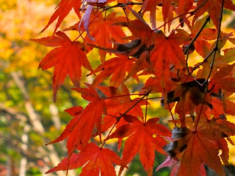 Fall in Japan: Top 5 Things to Do images