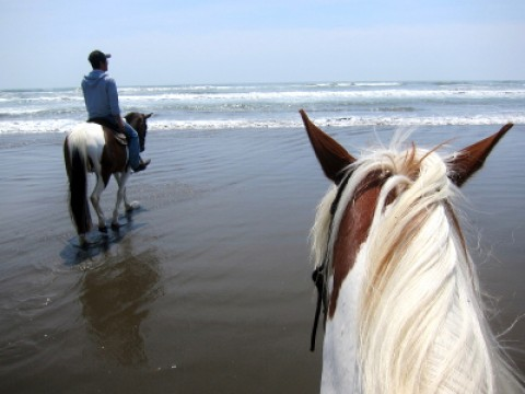 Horseback riding on the beach images
