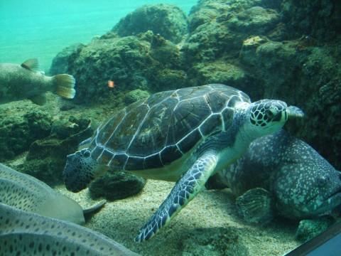 Hakkeijima Sea Paradise images