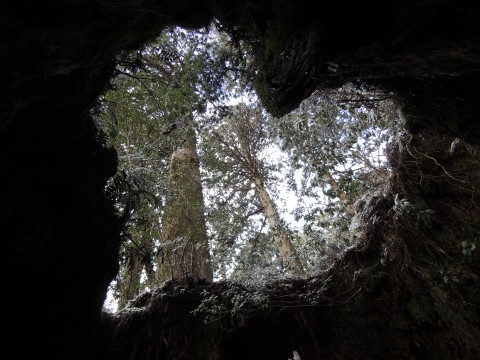 Kagoshima, Japan: Mysterious forests of Yakushima, exciting taste experiences images