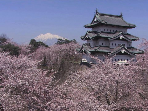 Hirosaki, Aomori For Beautiful Cherry Blossoms in Japan images