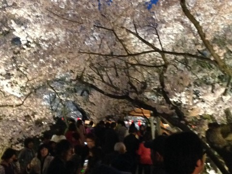 The Roof of Japan: where sakura bloom in Golden Week within 3 hours of Tokyo! images