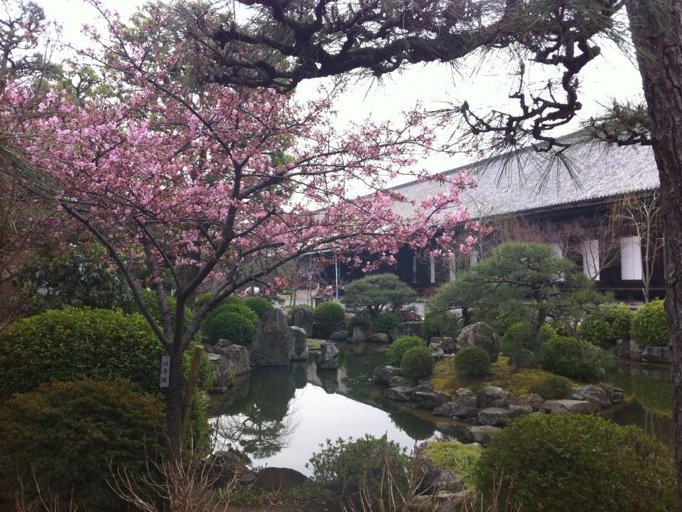 my first sakura bud!