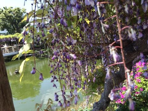 Kameido Tenjin Shrine images