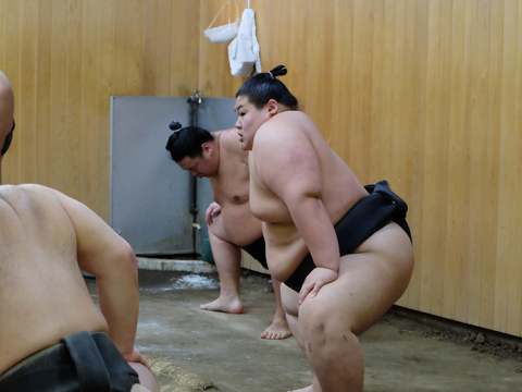 Morning sumo practice in the Kitanoumi-beya images