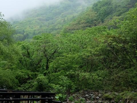 Hoeiso ryokan in Hakone images