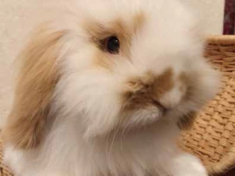 Craze for Friendly and Cute Rabbits images