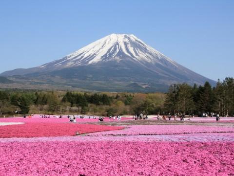 Fuji Shibazakura Festival! images