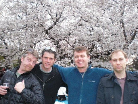 Cherry Blossoms... desu images