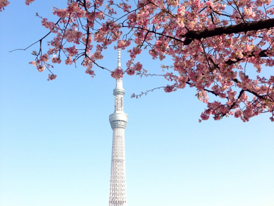 Tokyo Skytree from Sumida Park