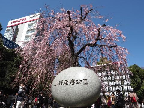 Ueno park ohanami images