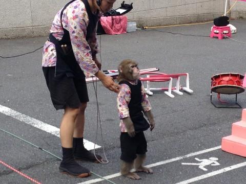 Tokyo Tower Monkeys (Sarumawashi) images