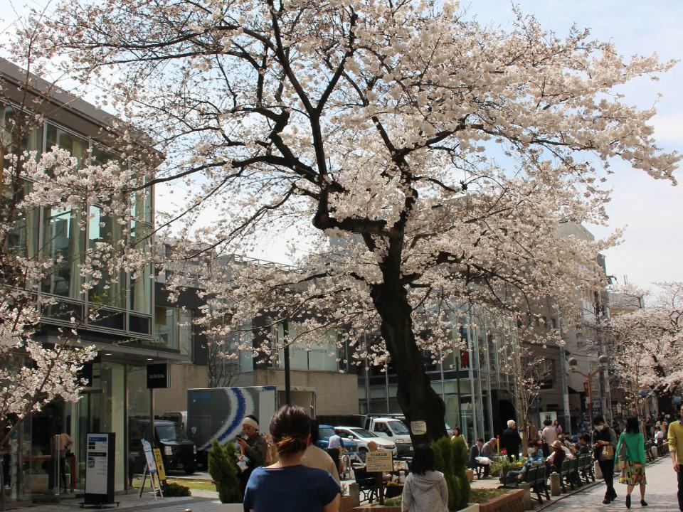 Jiyugaoka Main Street