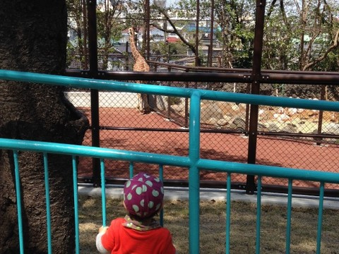 Happy Nogeyama Zoo in Yokohama images