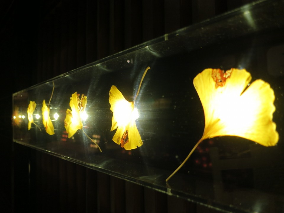 Real Gingko leaf lighting