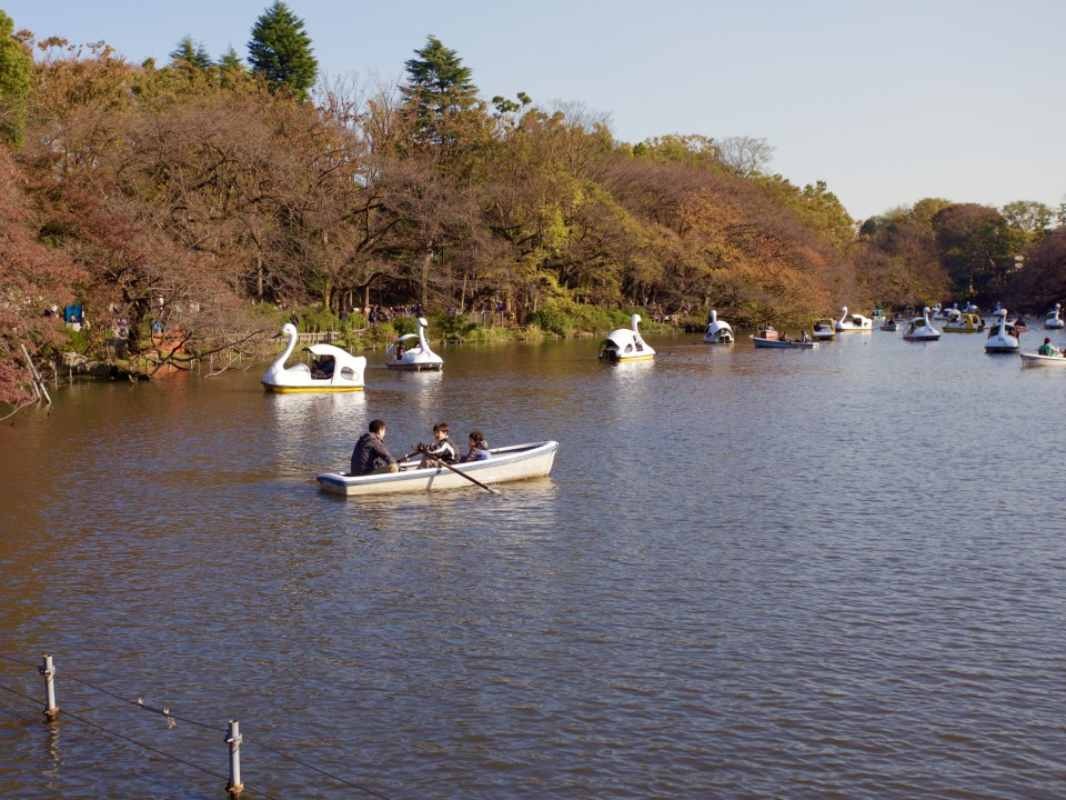 Row and paddle boat rentals