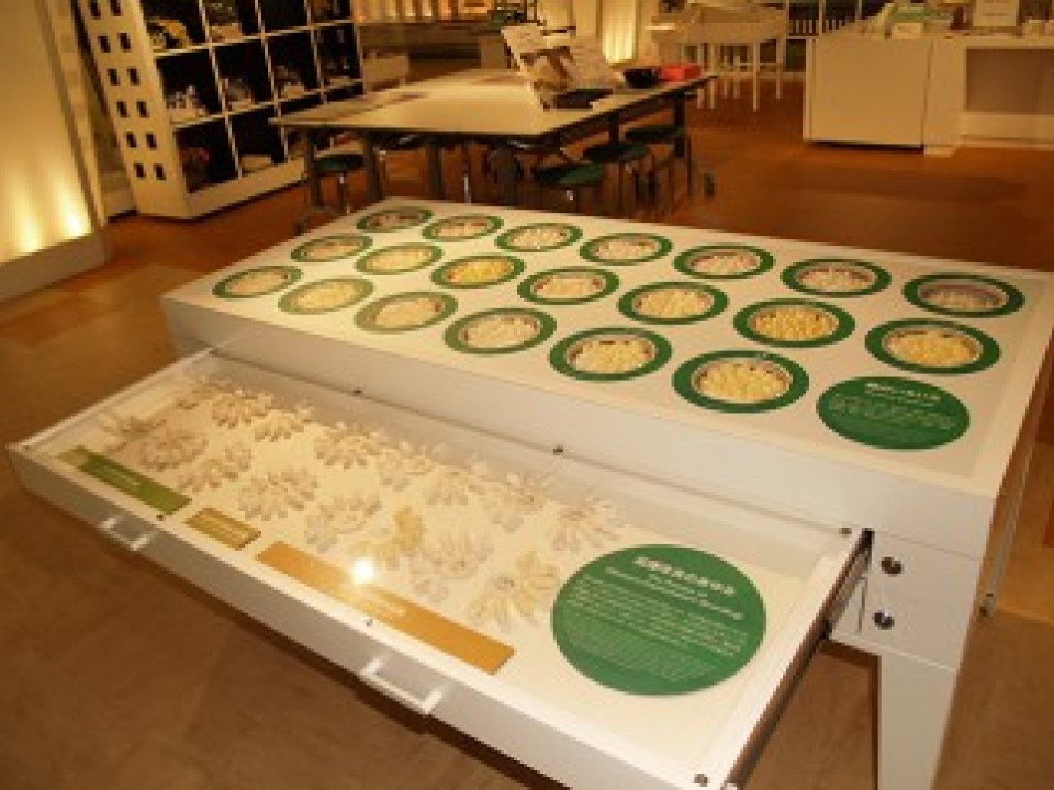 Be sure to look at the specimens to see variations in the cocoons' shapes and colors.
