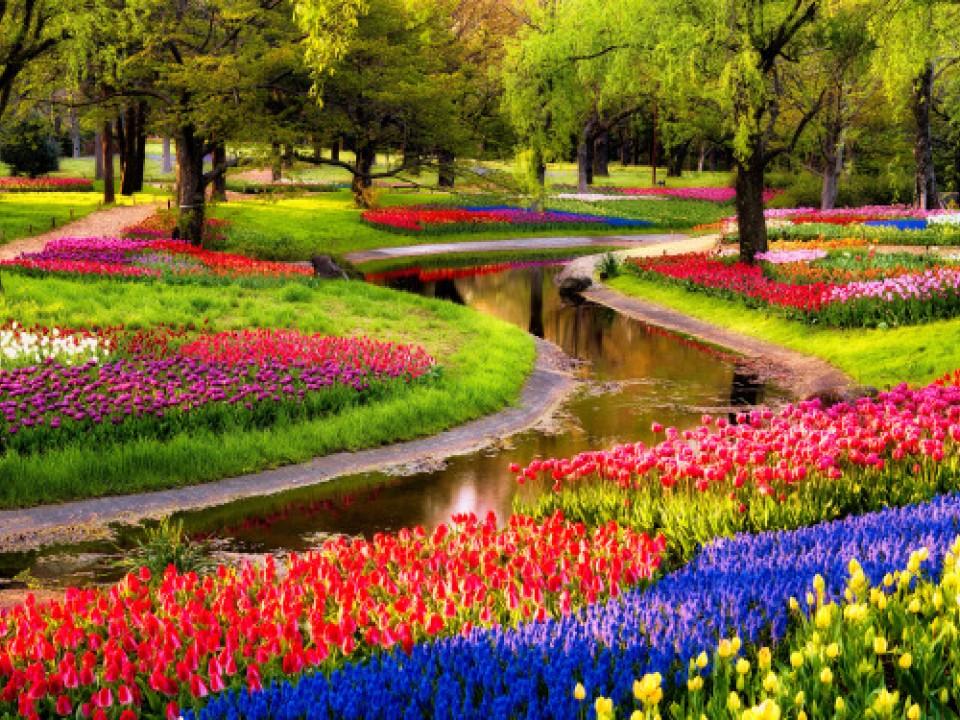 Flower Festival Showa Kinen Park