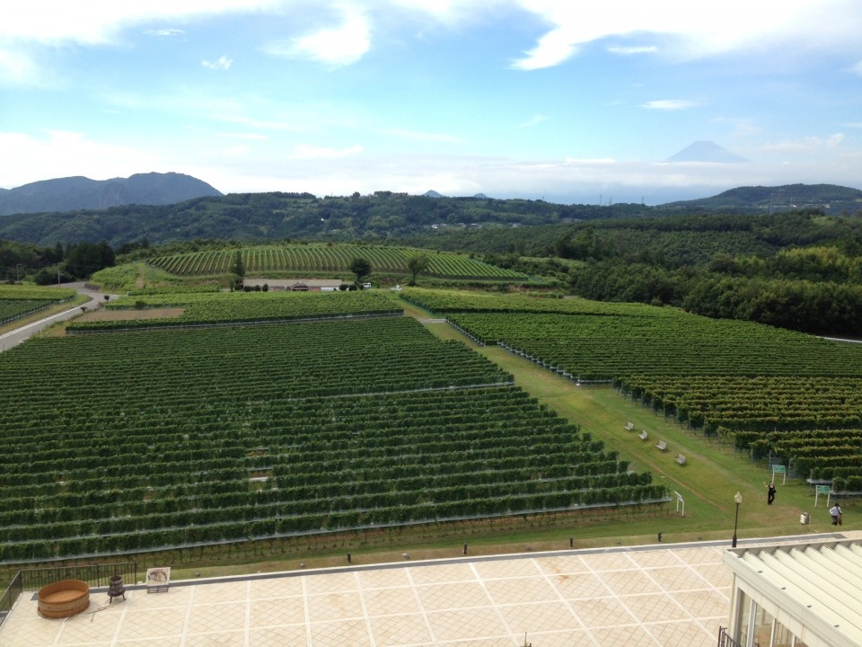 The winery grounds, with Mt. Fuji in the background