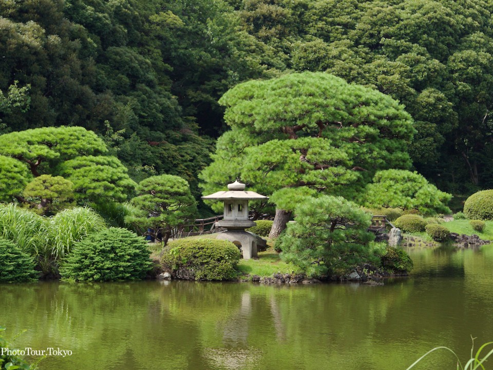 Japanese Garden in July