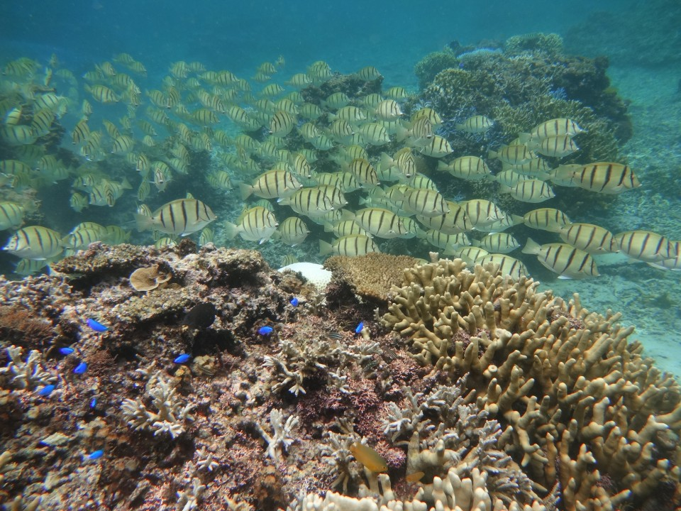 A Photo I took while snorkeling at Yoshino