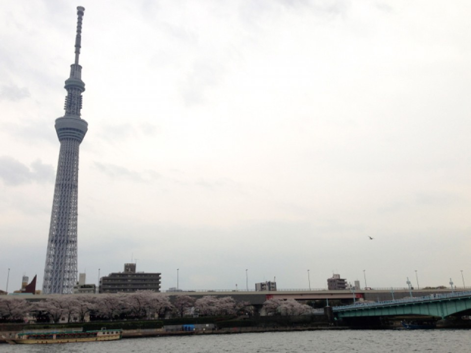 Sakura, Sumida river, Skytree