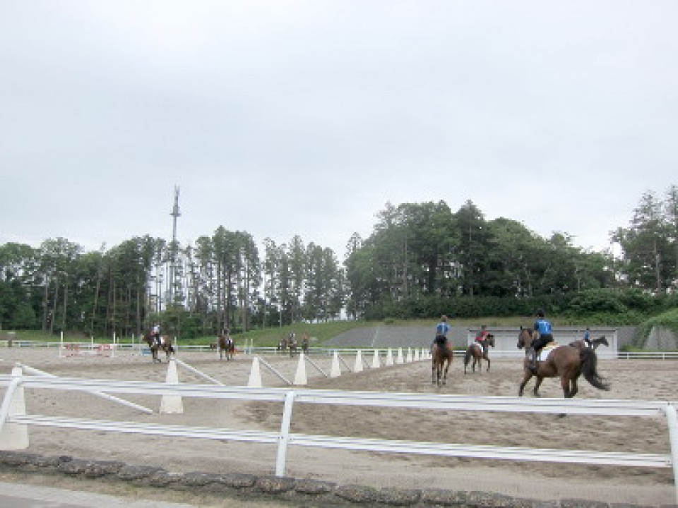 retired race horses are for junior riders
