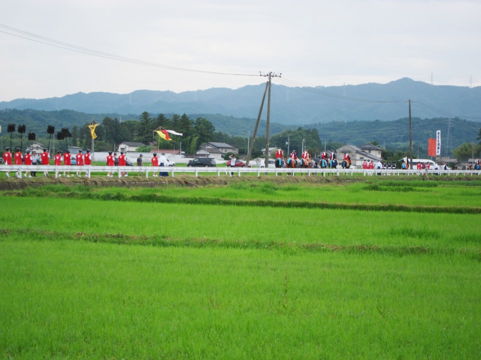 along the green rice field.