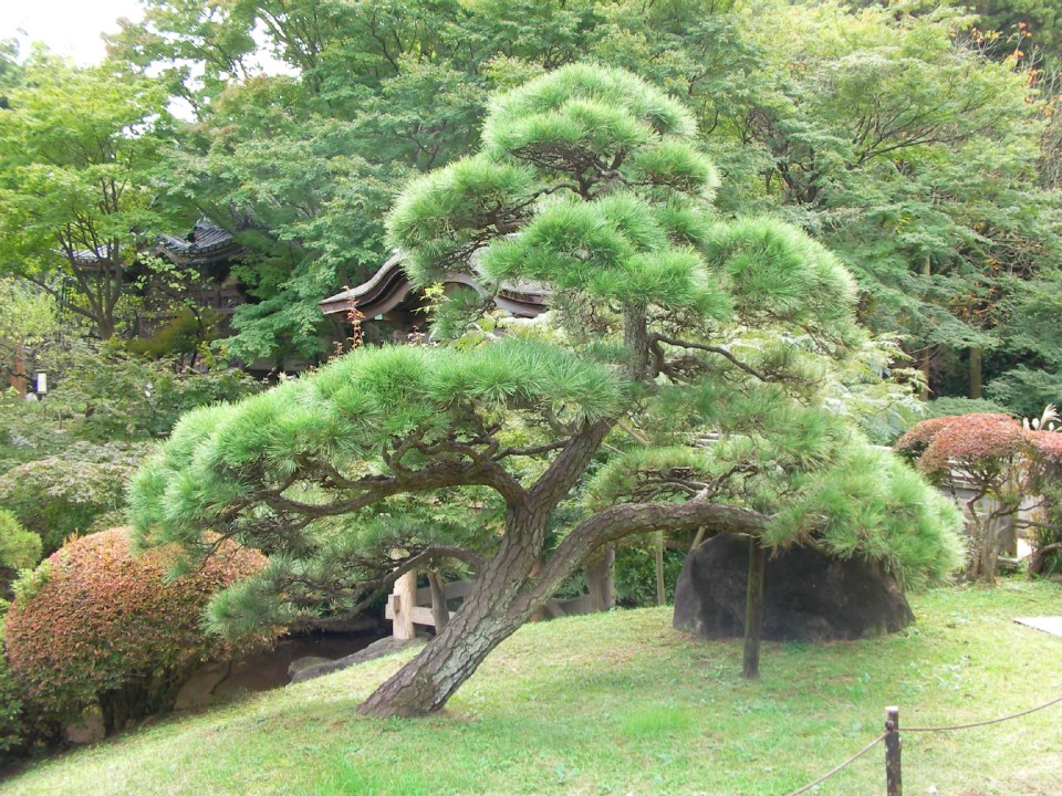 Fascinating trees at Honmoku Sancho Park