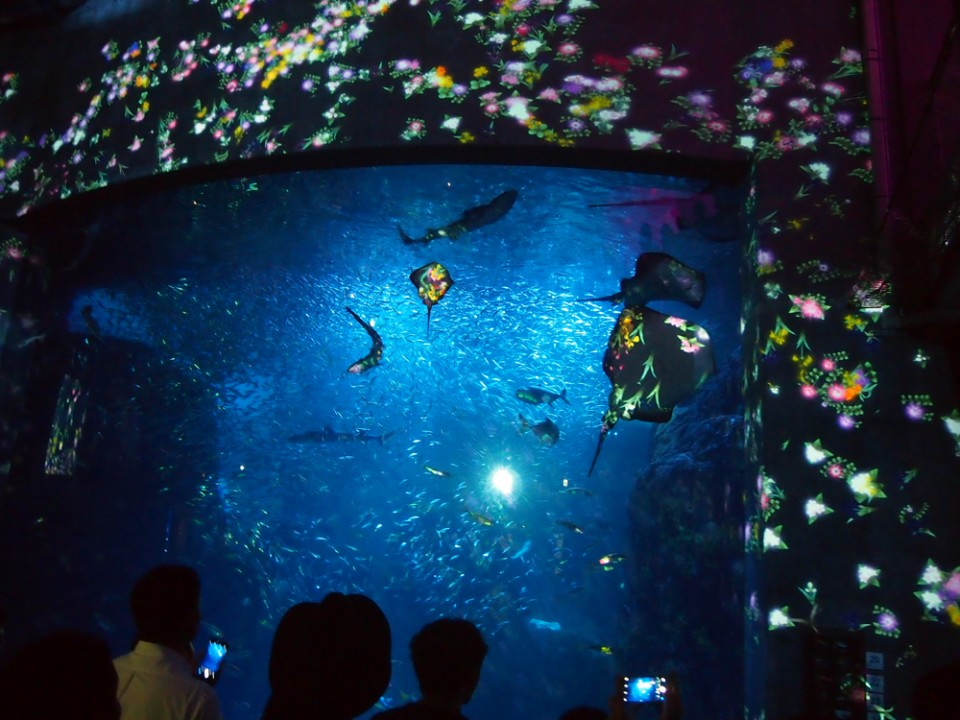 Enoshima Aquarium Night Wonder Aquarium Show