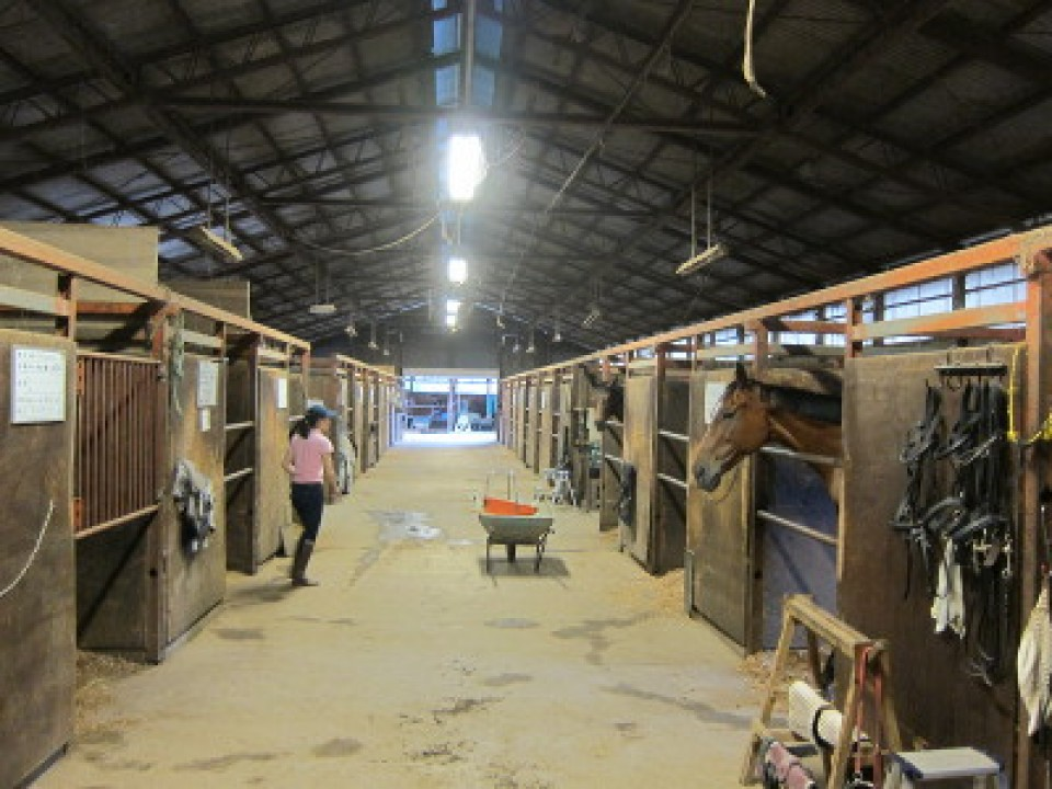 horse rooms
