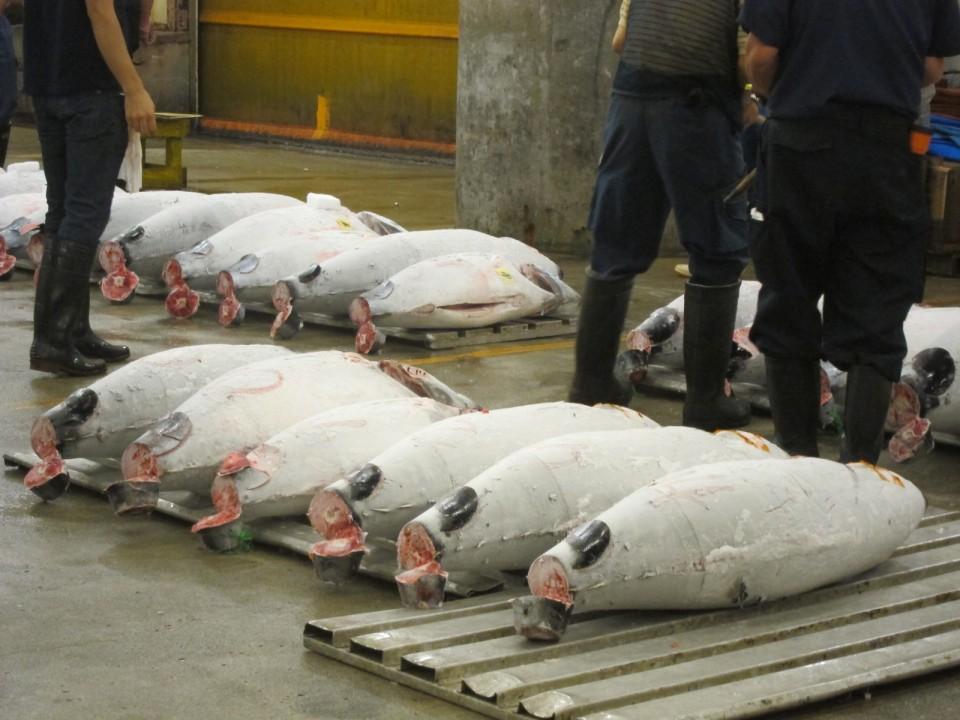 Frozen tunas