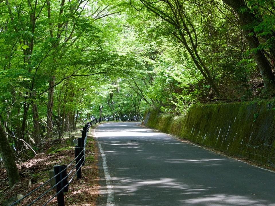 Road around the lake