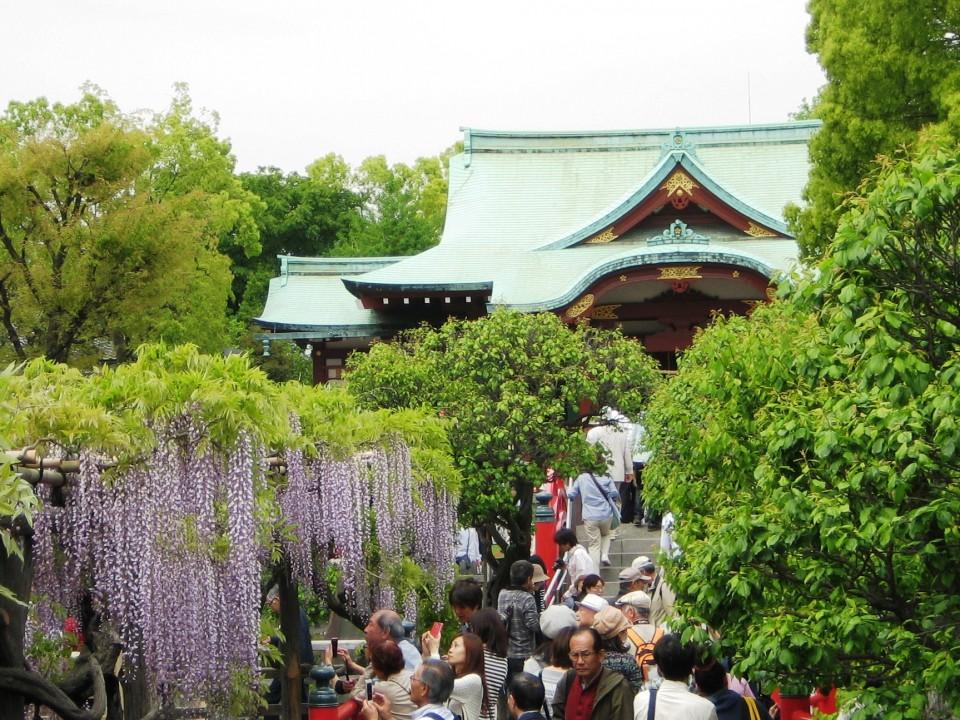 Fuji Matsuri in Spring