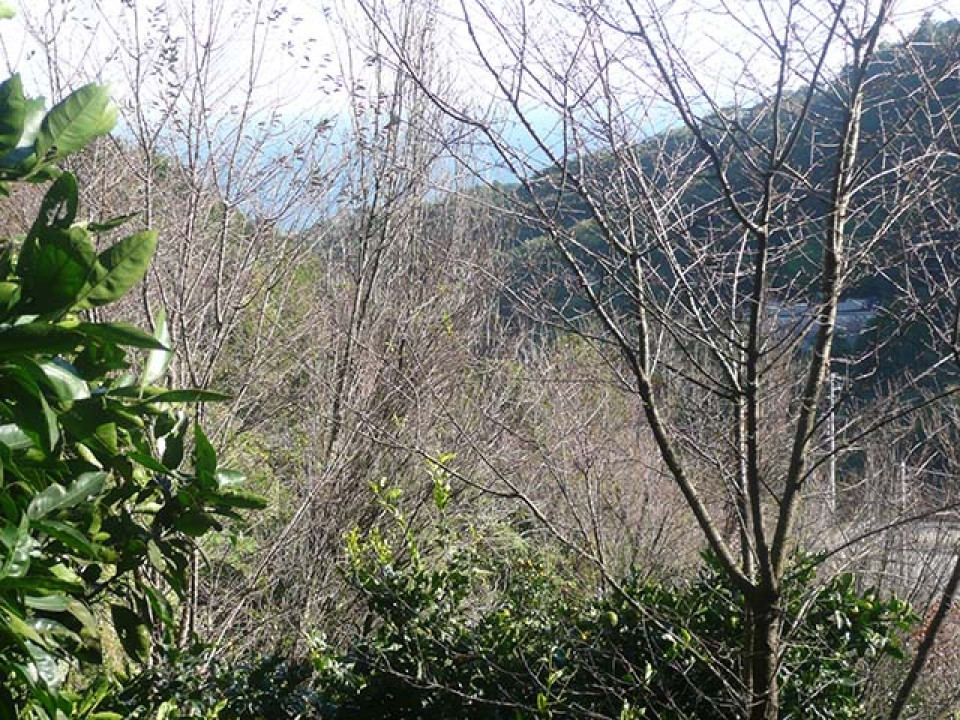 The 200 flowering peach trees (terute-momo) planted on the slope of a mountain