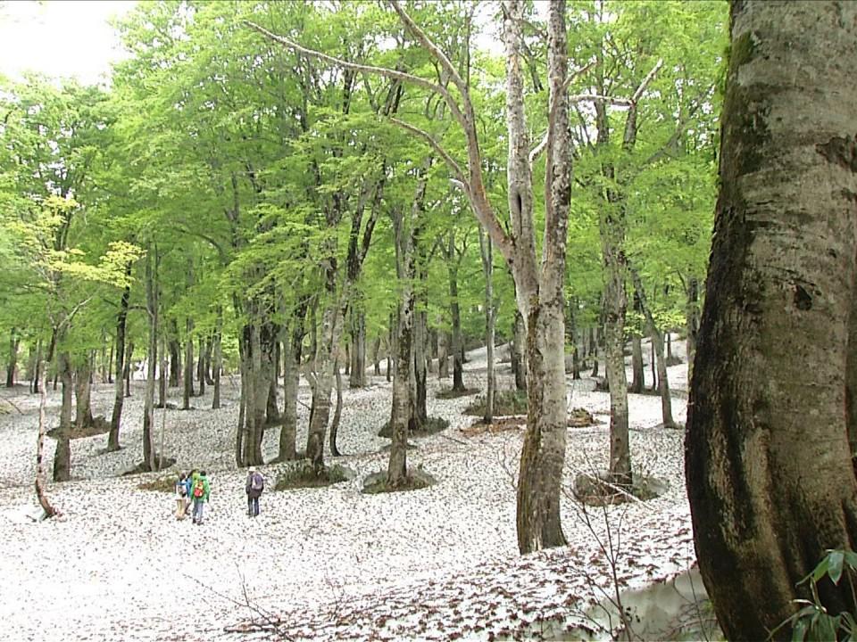 Green healing in Yamagata