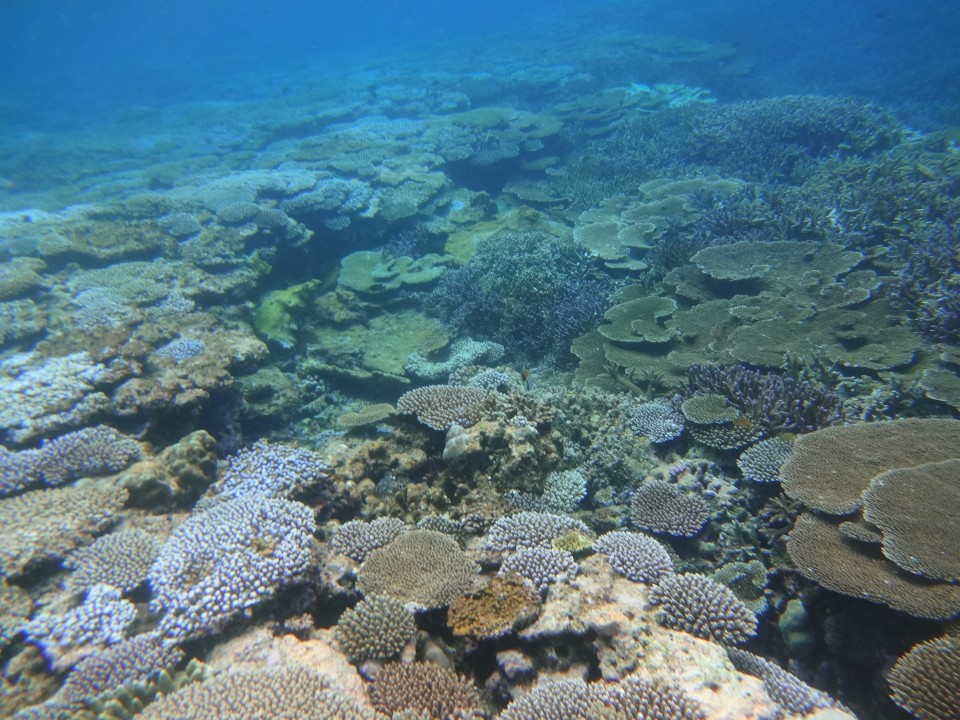 Coral Reefs at Yabiji (八重干瀬)