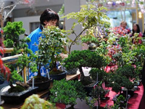 Check out Shunkaen Bonsai Museum images