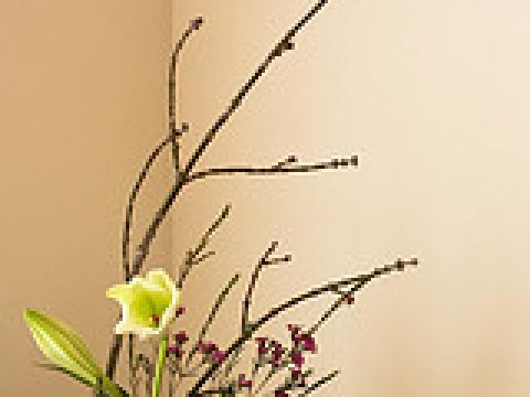 Check out the Ohara School of Ikebana images