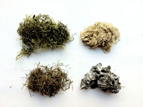 Stuff on Seaweed! images