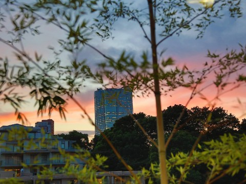 The Grand Hyatt Hotel at Roppongi Hills is always a lovely place to visit images