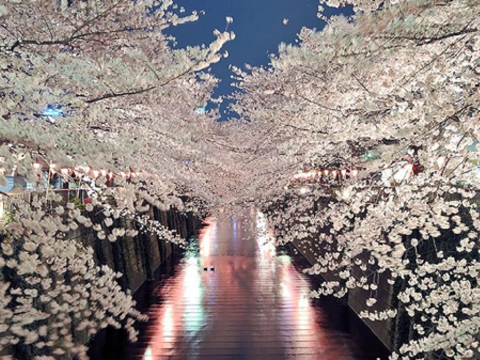 Night time cherry trees!