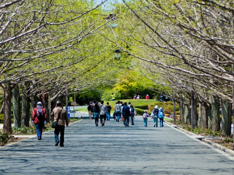 Family-Friendly Showa Kinen Park, the perfect getaway from city life for kids during you Japan Stay. images